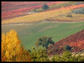 I frutti del bosco d 39 autunno di pier luigi nanni for Colline o cabine marroni